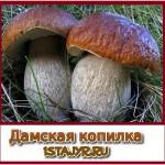 Борщ с грибами