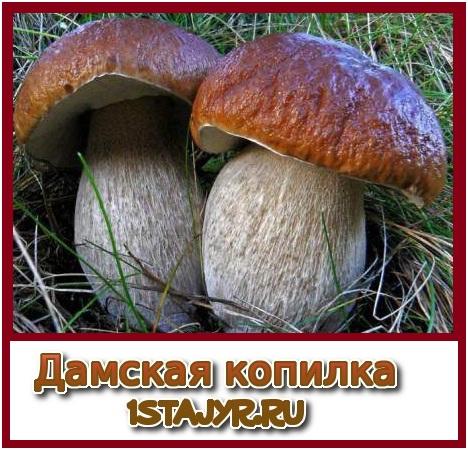 рецепт приготовления грибного борща