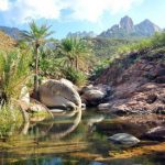 Сокотра(Socotra) — остров счастья